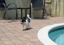 Truly Struttin Her Stuff around Her Pool!
